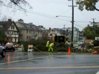 Tree crews work to remove a large tree from Piedmont Avenue on Saturday morning. Photo: Tracey Taylor.