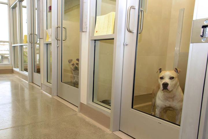 The shelter's new digs provide a safer, calmer atmosphere for animals, supporters say. Photo: Nancy Rubin