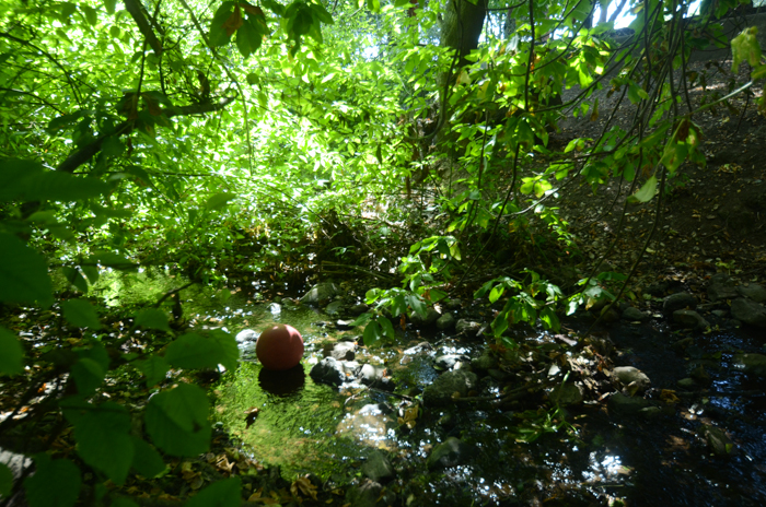 A ball left over from playtime sits in the Harwood Creek behind John Muir Elementary School. Photo: Julia Hannafin.
