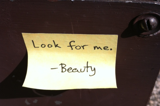 """Look for me. —Beauty."" Photo: Karen Stevenson"
