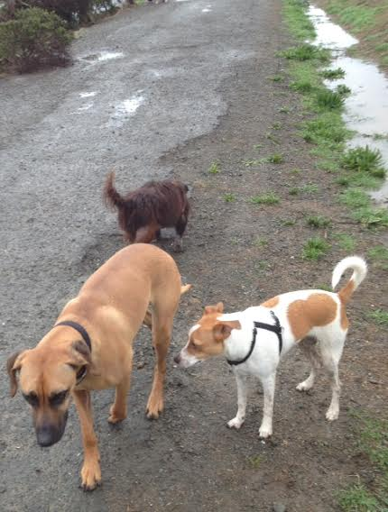 Berkeley dogs in the rain at Point Isabel. Photo: Peggy Scott
