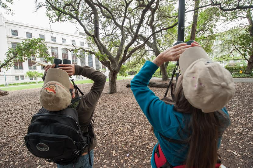 Maureen Lahiff and Jack Gedney search for birds on the UC Berkeley campus. Photo: Peter Maiden