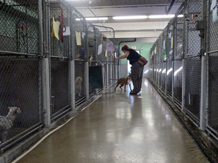 A view down an aisle through the chain-link kennels at the old animal shelter on moving day in November 2012. See more photographs from the move. Photo: Nancy Rubin