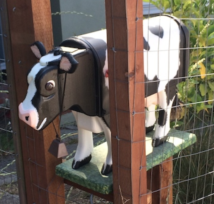 Cow mailbox at 1145 Keith Street.  Photo: Tom Dalzell