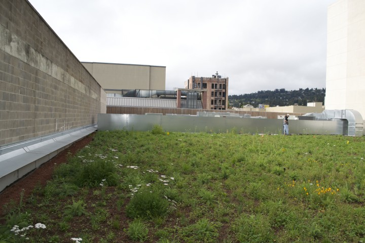 Living roof at Freight and Salvage.  Photo: Eden Teller.