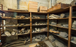 Some 20 tons of fossils from California tar pits are housed in the tower. (UC Berkeley photo by Kevin Nguyen)