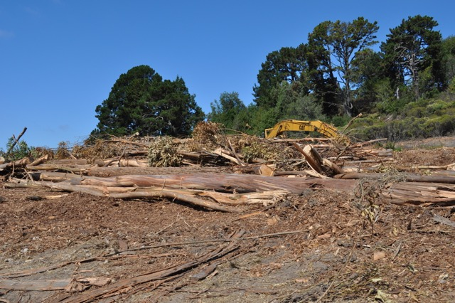 UC Berkeley removed hundreds of trees at Frowning Ridge without permission, making the area ineligible for funding from FEMA. Photo: Hills Conservation Network