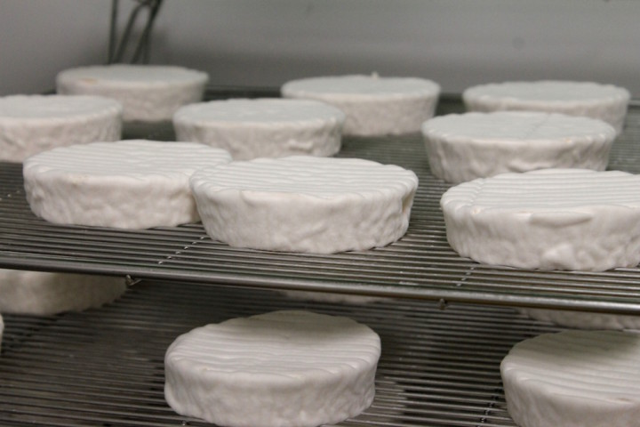 The soft ripened cheese after 10 days at Kite Hill. Photo: Kate Williams