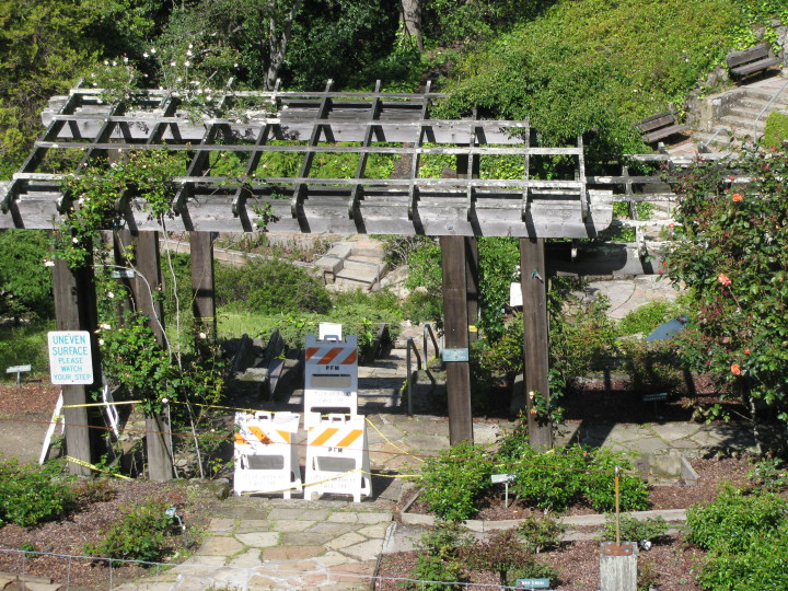 The city does not plan to repair the trellis at the rose garden until 2018-19. Photo: City of Berkeley