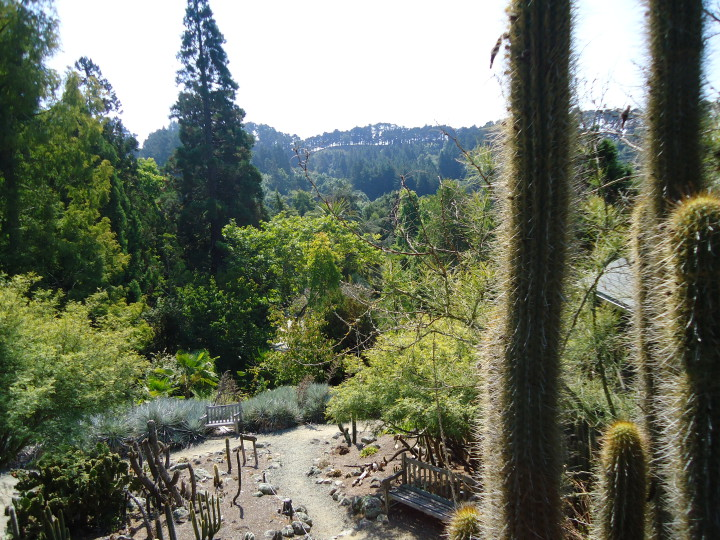 The UC Botanical Garden at Berkeley kicks off its 125th anniversary celebration on Sunday June 28.