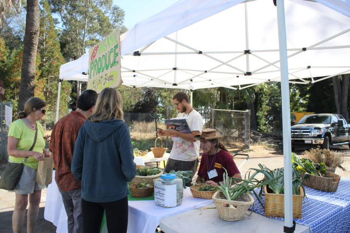 The UC Gill Tract Community Farm's farmstand, open Sundays on San Pablo Ave. Photo: Kathleen Costanza.