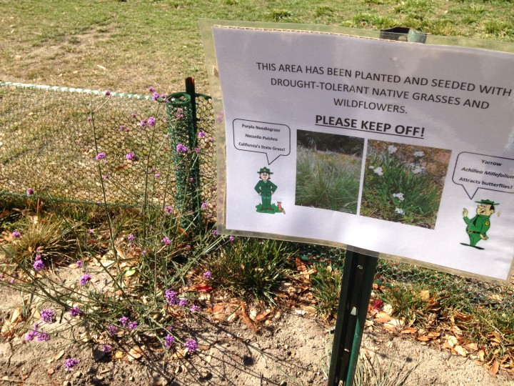 A strip of grass near the Little Farm was replaced with native plants to save water.
