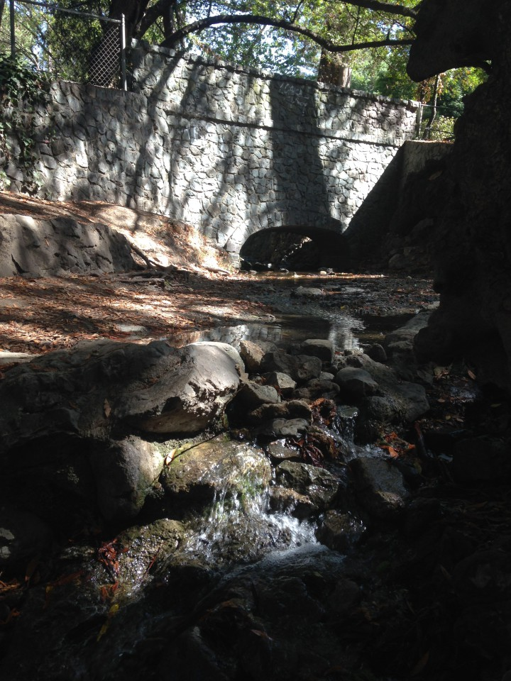 Codornices Creek, shown here in Live Oak Park, is very low and might be dry if it weren't for East Bay MUD water that makes its way into the creek. Photo: Mary Flaherty