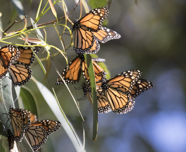 [INSERT PHOTO: 3217 CAPTION: Butterflies in sunbeams show their bright colors. Photo: Elaine Miller Bond]