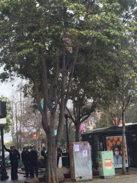 A man climbed a tree in Berkeley, and police responded after someone called due to concern. Photo: Brian Bednarz
