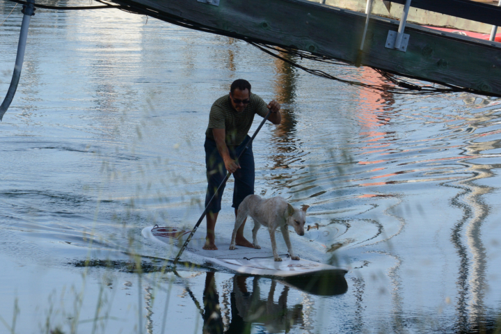 Have friend, will paddleboard. Photo by Mohan Ajmani taken at the Berkeley marina on April 18, 2016