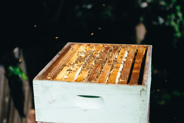 A bee hive without its lid. Photo: Melati Citrawireja