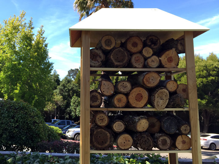 Bee hotel at the Claremont Hotel. Photo, taken on July 15, 2016, by Emilie Raguso