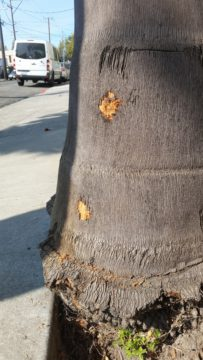 Bullet holes scar the trunk of this tree. Photo: Chris Greacen