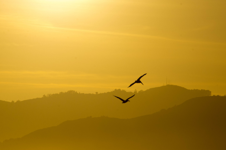Birds at Sunset by Mohan Ajmani