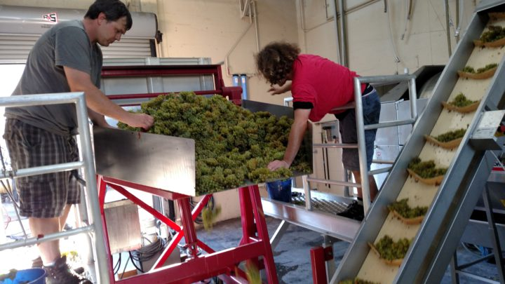 Before they are pressed, the grape cluster go through this machine, which removes the stems. Photo: Erin Callihan