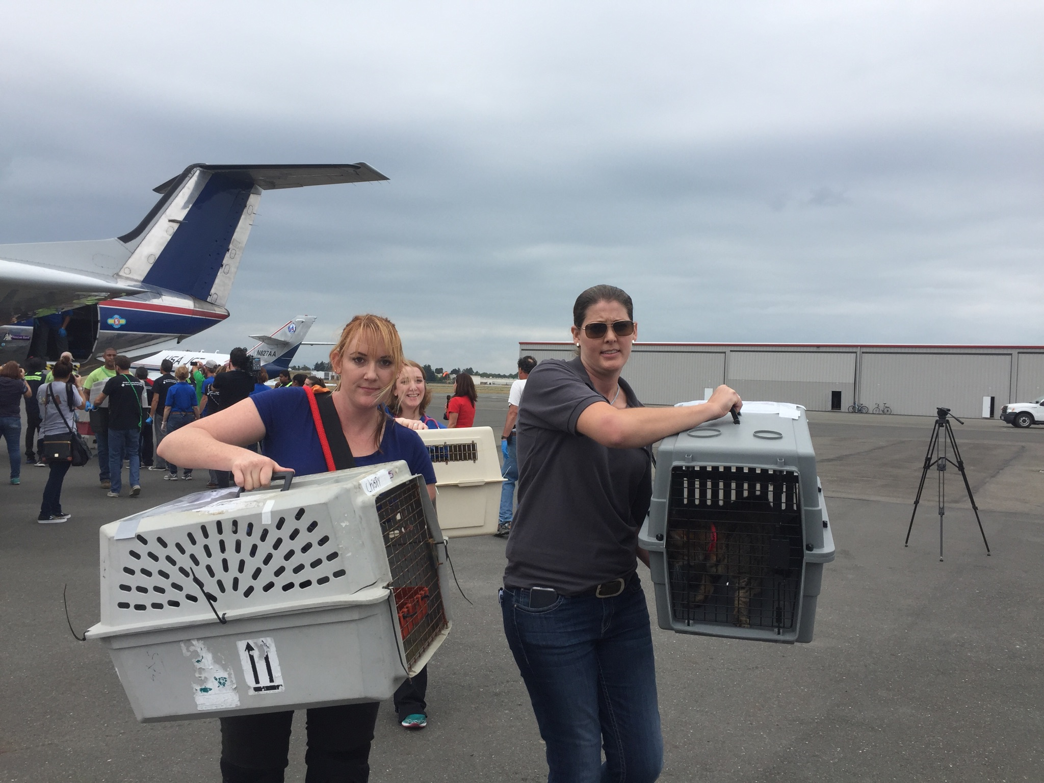 Animals were vetted on the tarmac and then distributed among three local animal-rescue shelters