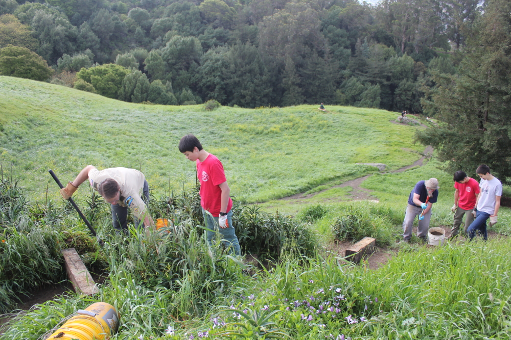 Volunteer group breathes new life into a neglected local
