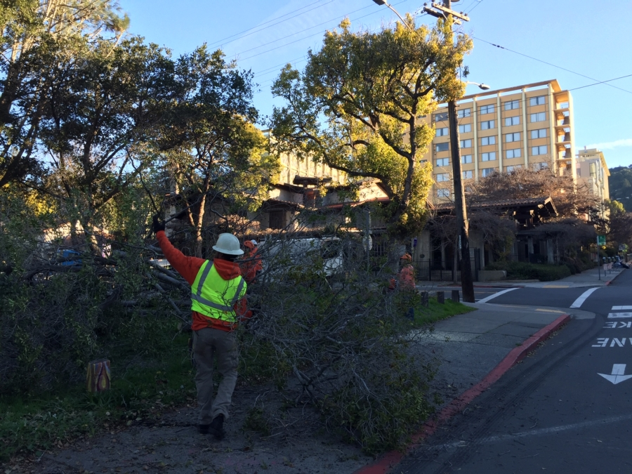 Berkeley Academic Calendar.Cal Removes 42 Trees At People S Park To Address Long Deferred