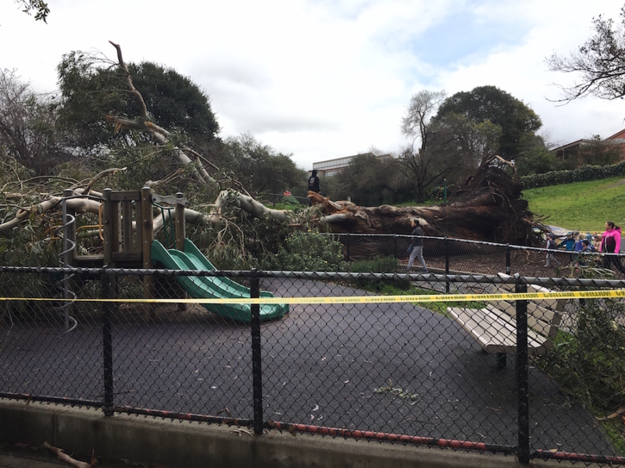 The toppled eucalyptus fell across the park and struck a play structure.