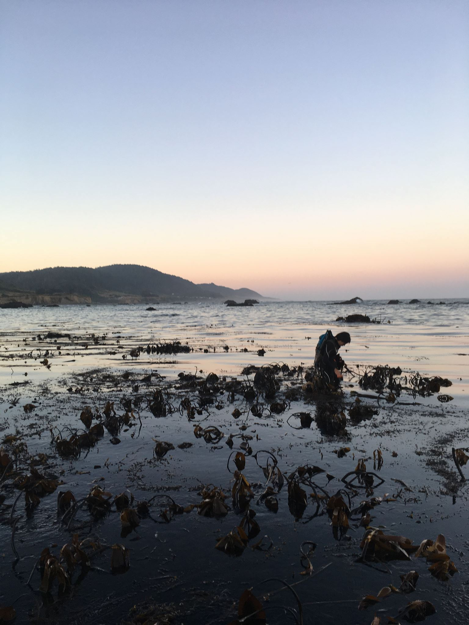 This Oakland wild harvested seaweed company makes a case for