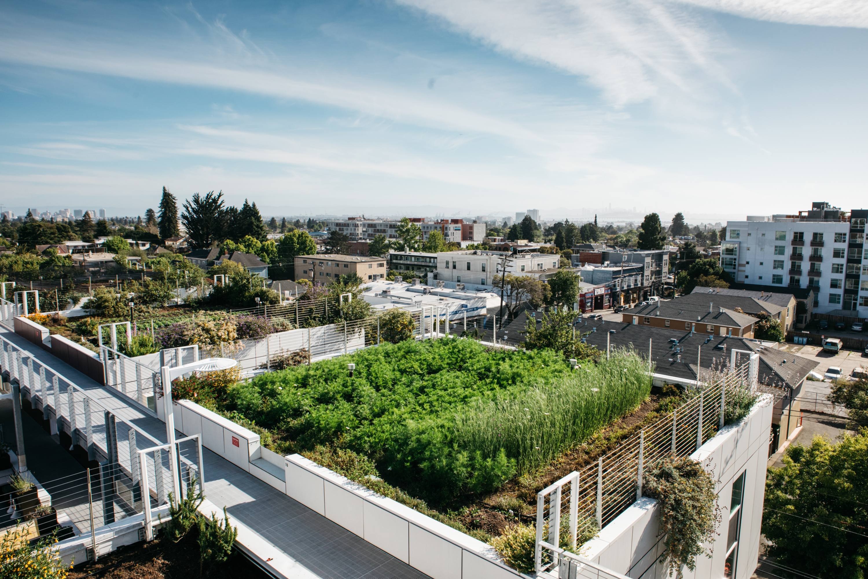 Bluma flower farm on the rooftop of the apartments at Dwight Way.