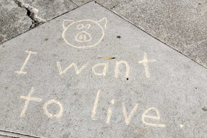 "chalk words on sidewalk"" I want to live"