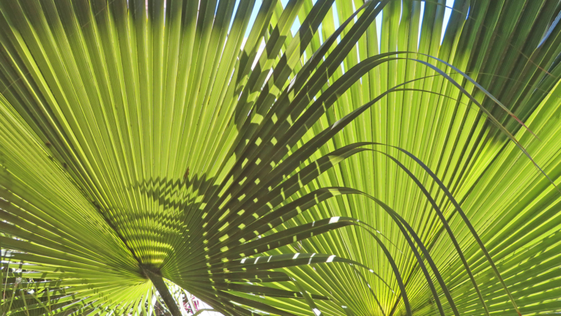 close up of green pond fronds