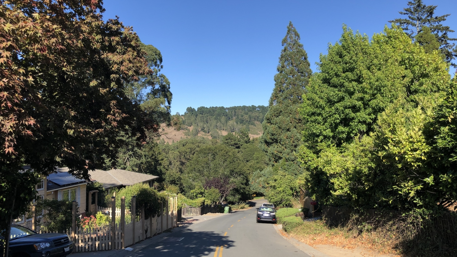 tree lined residential street leads into undeveloped hill