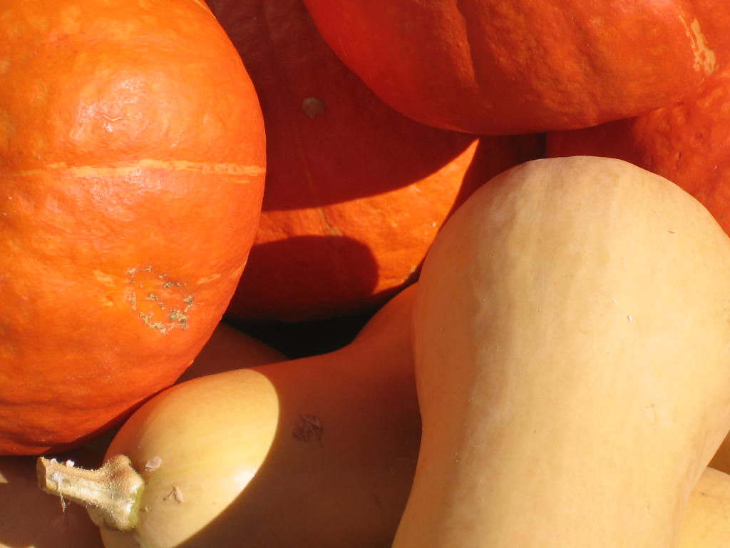 close up of pumpkins and squashes