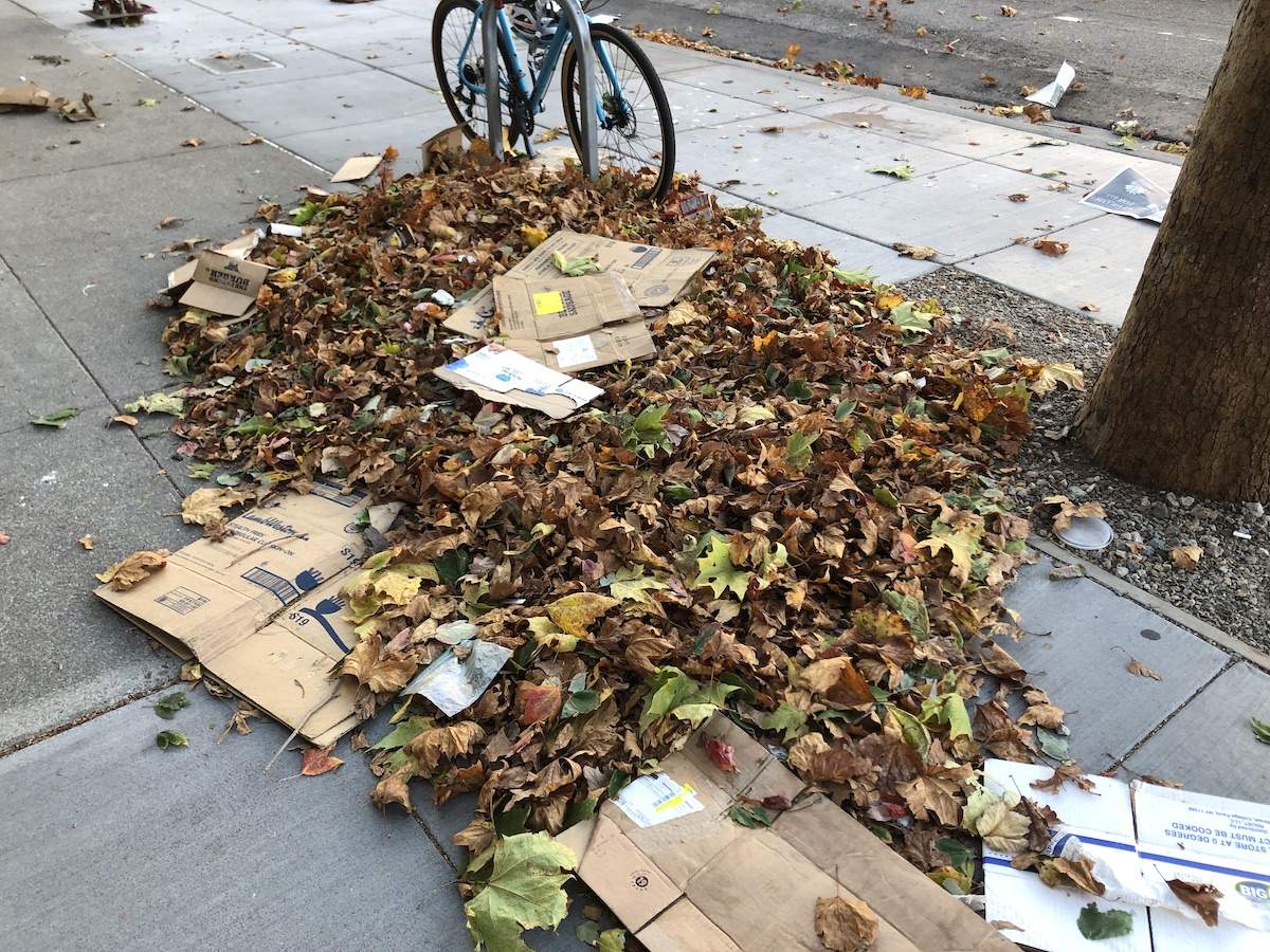 pile of leaves and trash