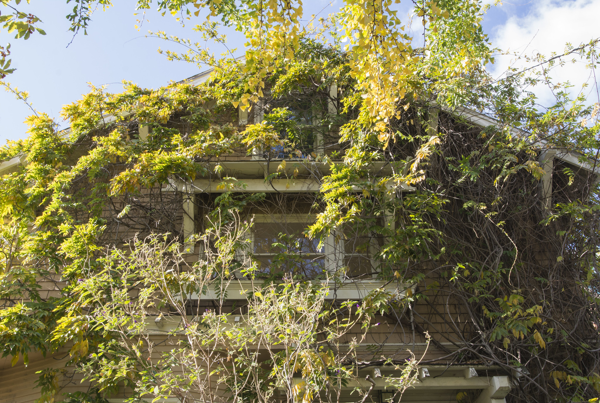 house covered in vines