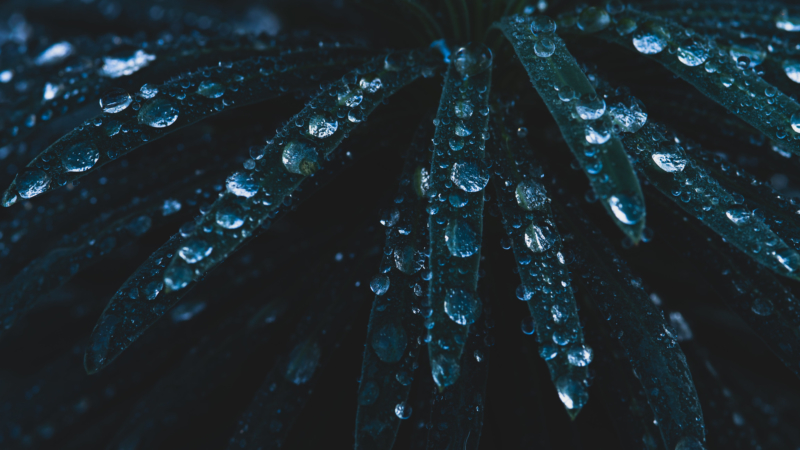 Drops of water on leaves.