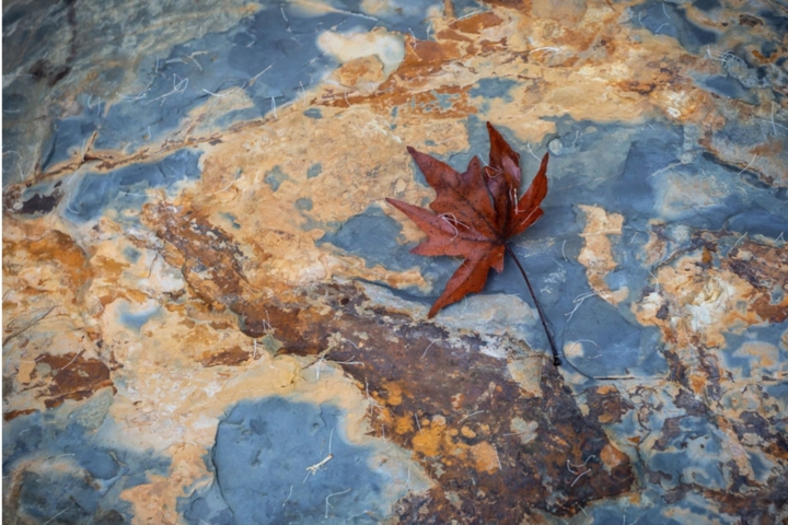 Red leaf on rock whose surface looks like a map