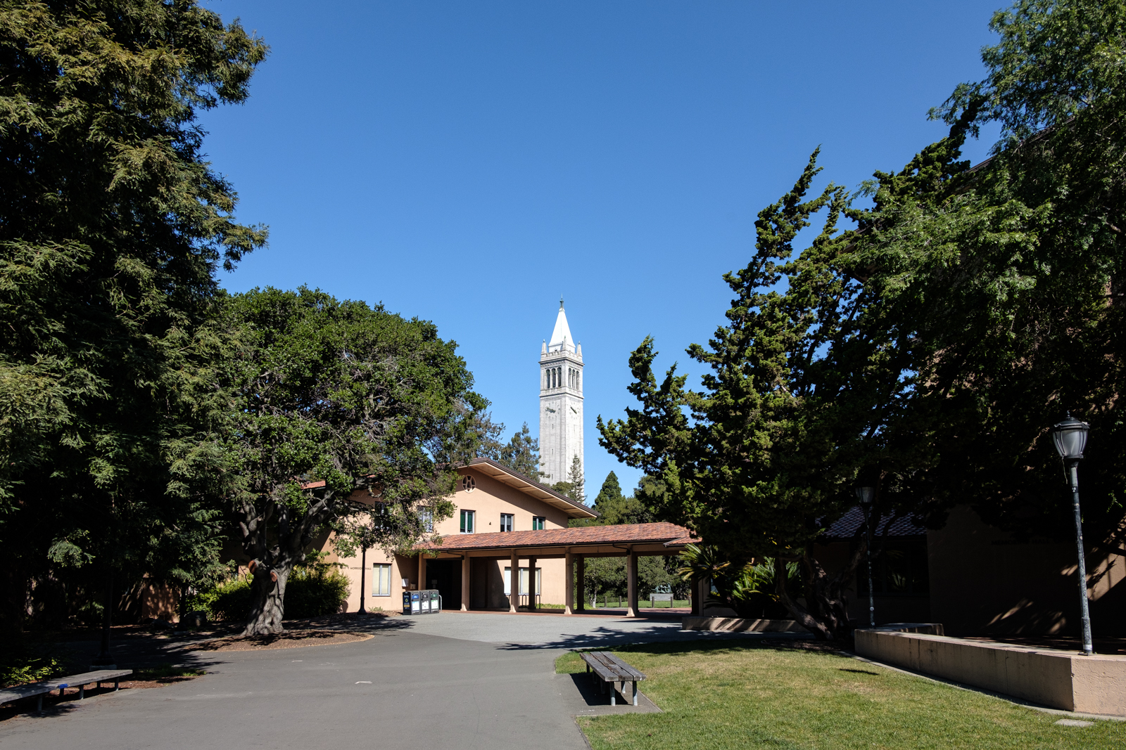 UC Berkeley campanile tower surrounded by trees