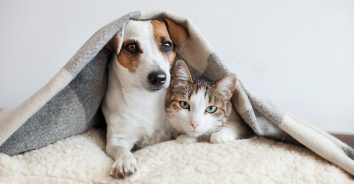 Dog and Cat together scaled e1588793238449 1536x803 1