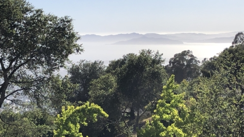 View of San Francisco Bay from the hills with trees in front