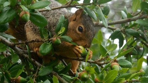 A close-up of a squirrel in a tree