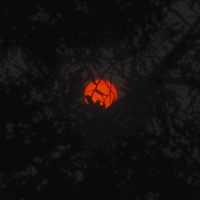 a red sunrise in between dark trees early in the morning