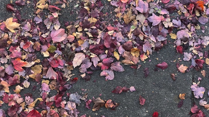Fall leaves on the sidewalk.