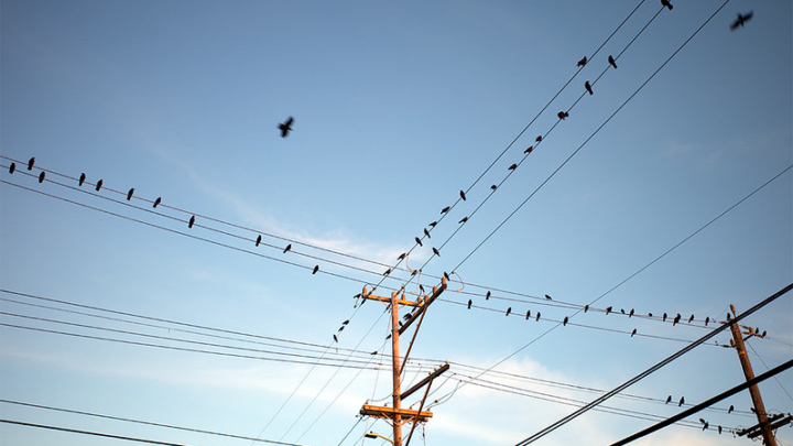 birds sitting on telephone wires