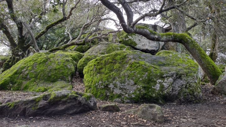 large rocks covered with moss and surrounded by trees