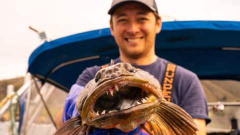 A fisherman holds up a freshly caught lingcod.
